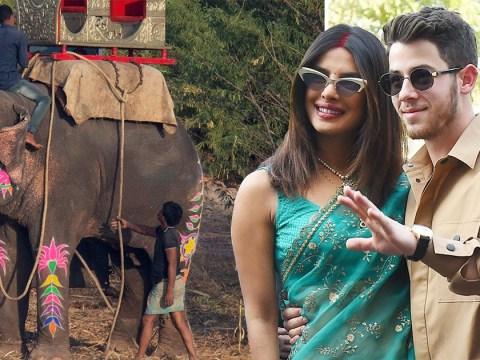 Peta accuse Priyanka Chopra and Nick Jonas of 'animal cruelty' for using elephants in their Indian wedding
