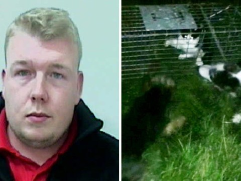 Footage of dogs ripping cat apart was so bad a judge had to leave court