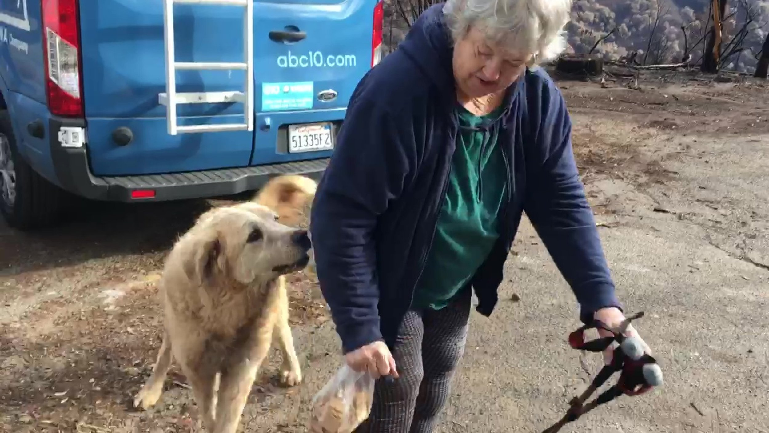 "In this Friday Dec. 7, 2018 image from video provided by Shayla Sullivan, ""Madison,"" the Anatolian shepherd dog that apparently guarded his burned home for nearly a month, greets his owner, Andrea Gaylord, as she was allowed back to check on her burned property in Paradise, Calif. Sullivan, an animal rescuer, left food and water for Madison during his wait. Gaylord fled when the Nov. 8 fire destroyed the town of 27,000. (Shayla Sullivan via AP)"