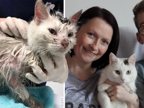 Cat who disappeared for 11 months reunited with family after nearly dying