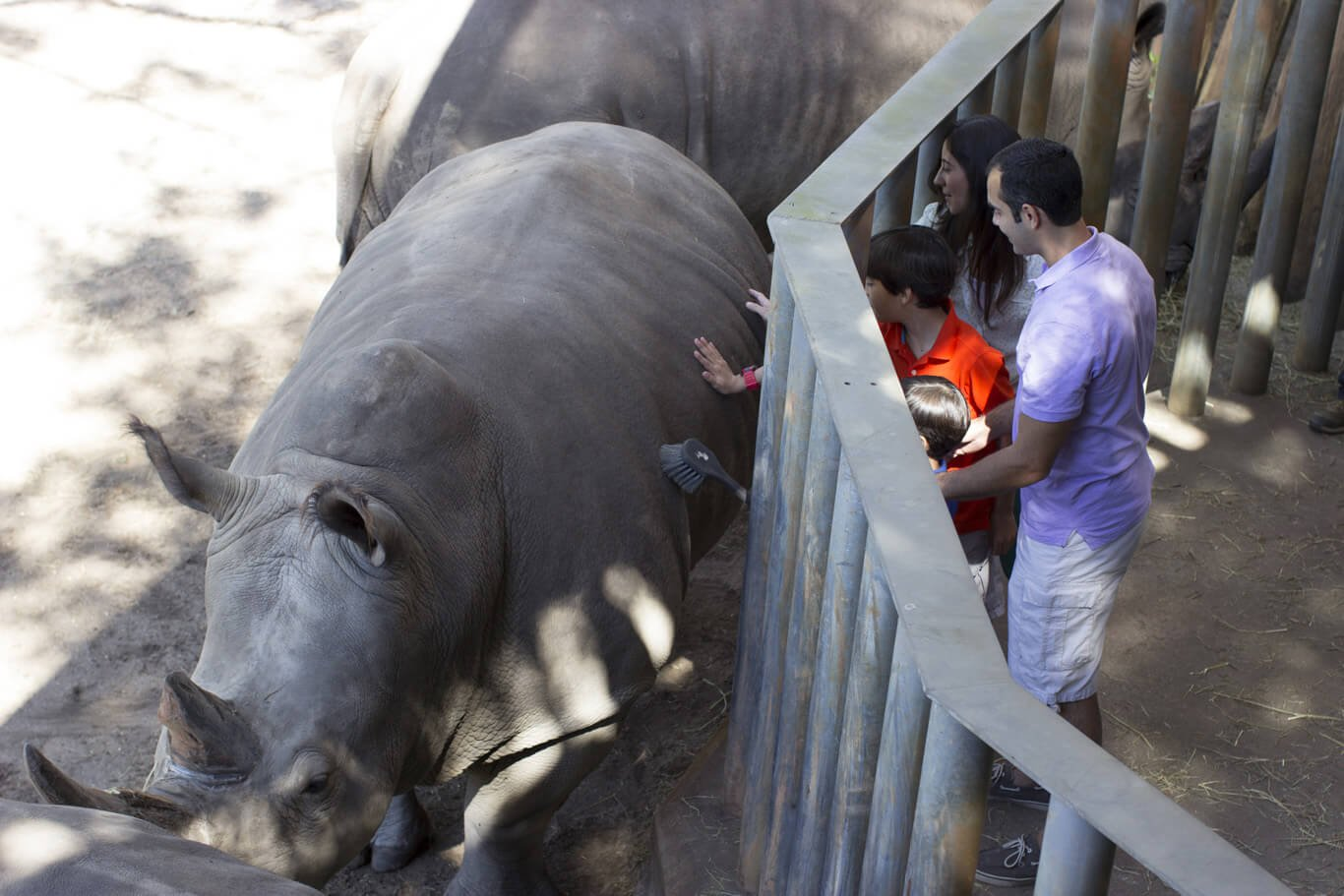 Child airlifted to hospital after falling into a RHINO enclosure at Florida zoo