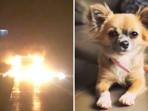 Dog died running back into burning van thinking owner was trapped inside