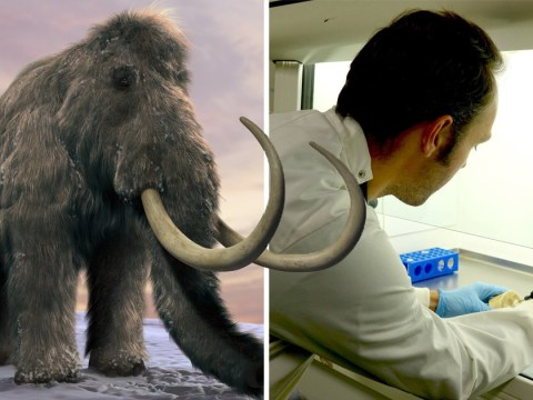 Scientists discover woolly mammoth DNA hiding inside illegal ivory trinkets