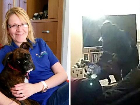 Dog walker caught smacking pet on owner's hidden camera