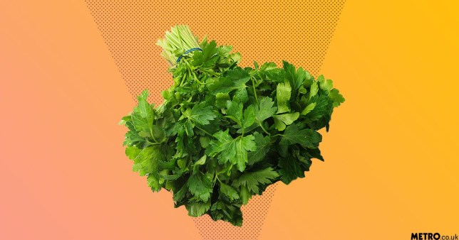 Putting parsley in your vagina to bring on your period is a