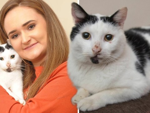 Woman reunited with cat three years after she was told he had been killed