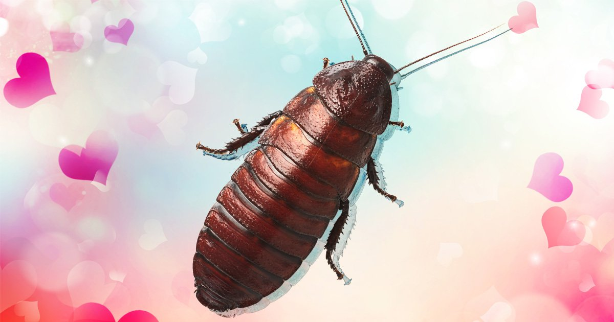 Man who dated a cockroach for a year and had sex dreams about it says humans aren't as attractive