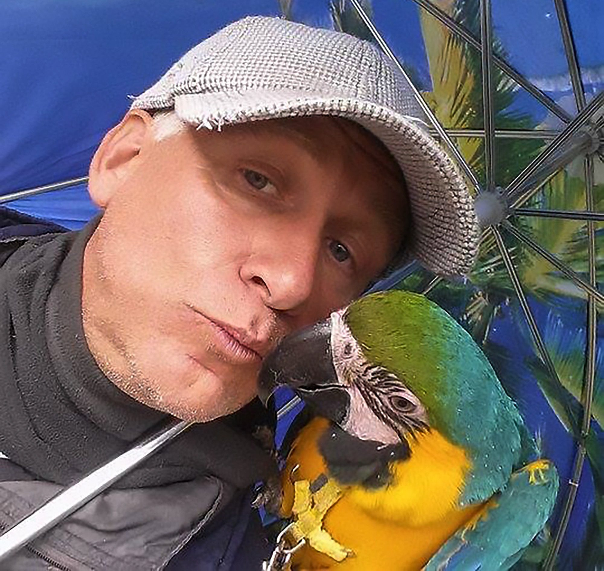"""Pic Shows: Parrot owner Joseph Verdyck; A hunter has admitted blasting a rare parrot out of the sky while it was being exercised by its owner because it was not illegal to shoot exotic birds. Parrot owner Joseph Verdyck from the Belgian town of Westmalle not only saw his pet shot, but then watched in vain as it was partially eaten by hunting dogs. He had taken his pet parrots Rambo and Mera for a fly in the outdoors. He had raised them by himself after hatching them from eggs, and even taught them to fly. He got the permission of a farmer to let the ara macaws, worth several thousand pounds each, fly over one of his fields. Verdyck said: """"Rambo became a fully fledged free flight bird after three years. According to experts he was one of the best trained parrots in Belgium. """"He is often allowed together with Mero to fly free for the day, in the summer a bit longer than in winter."""" Verdyck was however unaware that hunters were in the area, and within minutes one of them took aim at Rambo and blasted him from the sky. He then saw to his horror how the hunting dogs owned by the men immediately ran towards the parrot and savaged the poor bird in front of his eyes. An image shows the remains of the dead parrot on the ground with its red harness clearly visible. A shocked Verdyck immediately confronted the hunter who shot his beloved pet animal. Verdyck said: """"He apologised because he did not know it was my bird and said that he would have never done it if he had realised the owner was nearby, and that it was not an escaped animal."""" The hunter said that he saw the bird flying over in the sky and decided to shoot it as hunting exotic bird species is allowed in Belgium. He promised Verdyck he would contact his insurance company to see if the pet owner can be reimbursed. Verdyck however filed a criminal complaint against the hunter. He said: """"The man just shot for fun at Rambo. A hunter hunts for game: rabbits, pigeons and pheasant. Not a brightly-coloured parro"""