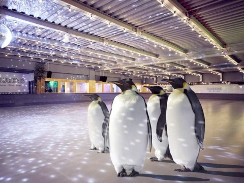 An event where you could ice-skate with real penguins has been cancelled due to animal welfare concerns