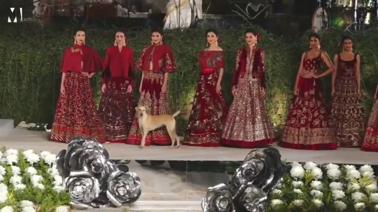 Stray dog steals the spotlight at fashion show Credit: Reuters