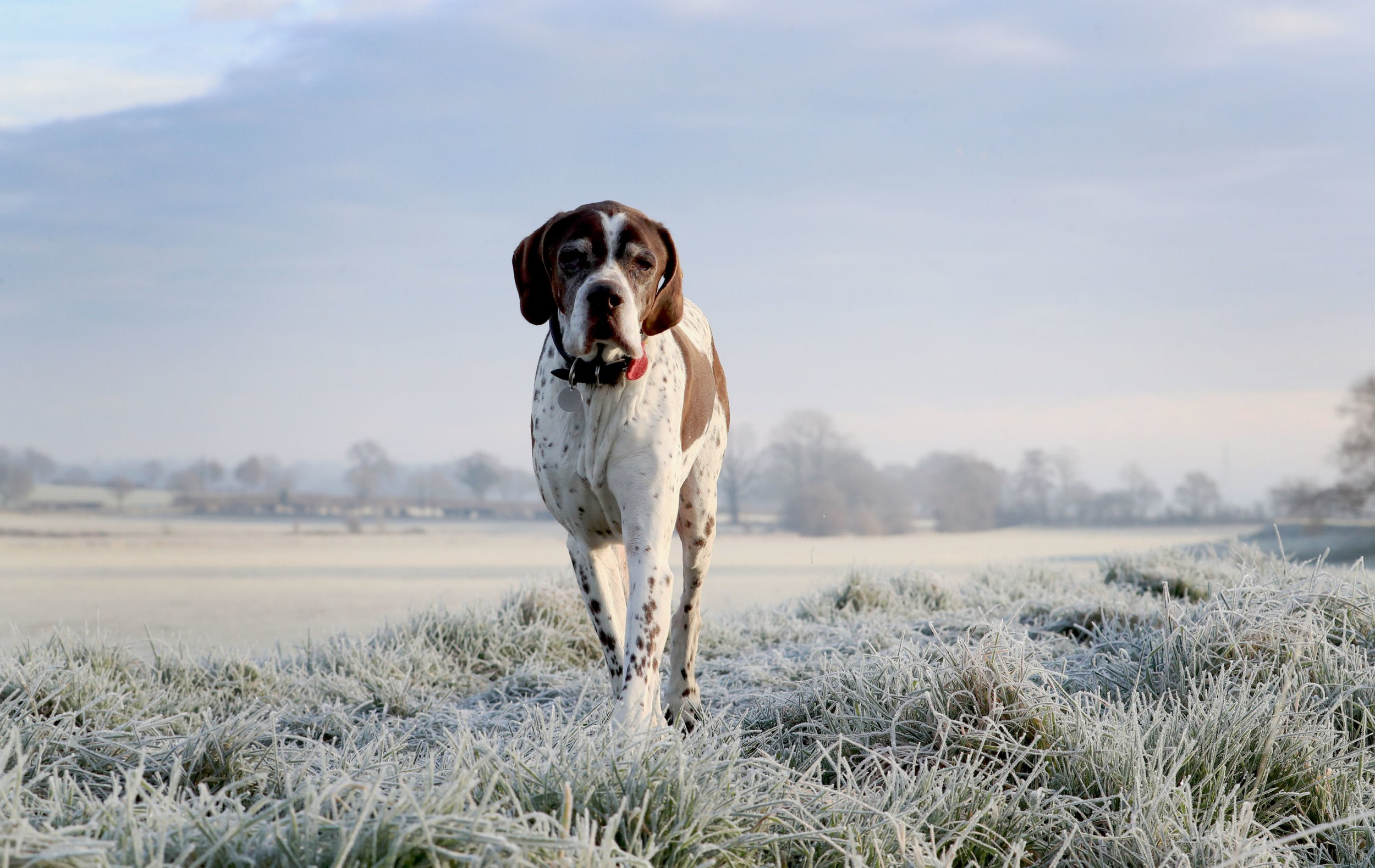 A dog out for a walk on a frosty morning near Bodiam in East Sussex, as the cold weather continues. PRESS ASSOCIATION Photo. Picture date: Thursday January 24, 2019. The Met Office issued its yellow severe ice warning for the south east, central and north of England as well as for Scotland from 6pm on Wednesday to 11am on Thursday. See PA story WEATHER Cold. Photo credit should read: Gareth Fuller/PA Wire