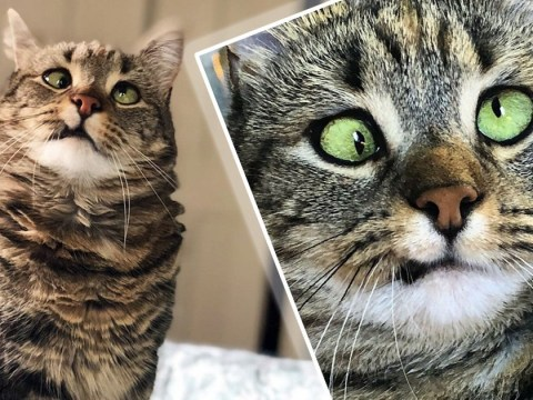We've fallen in love with Olive the cross-eyed cat