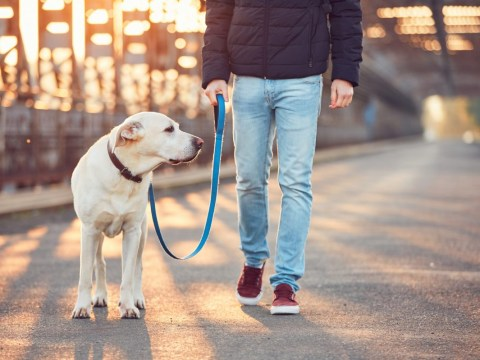 Becoming a dog-walker could earn you an extra £9,200 a year