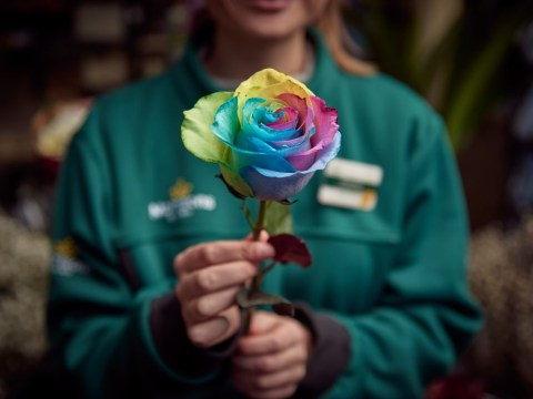 Morrisons is selling rainbow LGBTQ+ roses this Valentine's Day