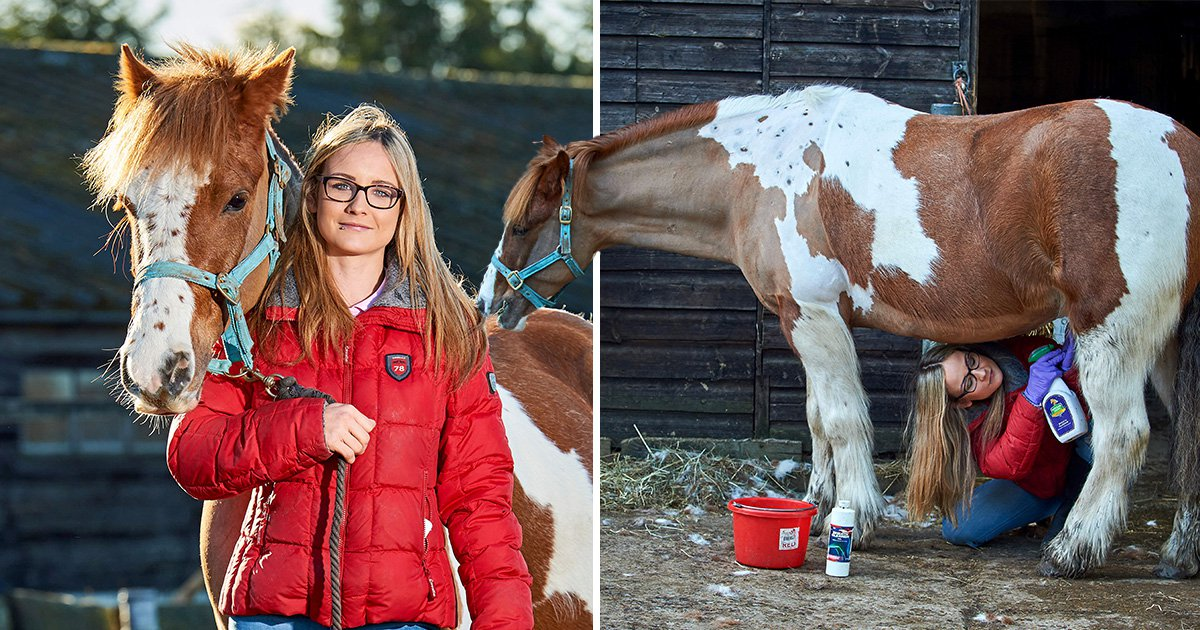 Mum claims to have the 'worst job in the world' – cleaning horse penises