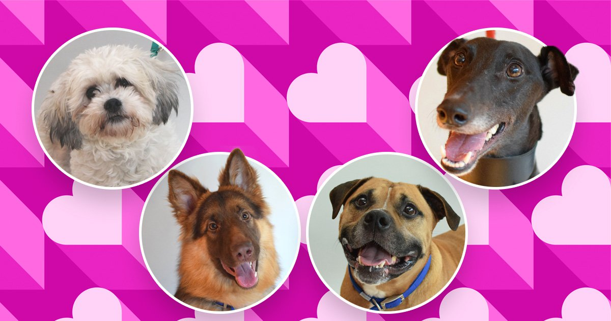 You can go speed dating with Battersea's loneliest residents for Valentine's Day