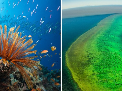 Great Barrier Reef will become 'rubbish tip' under plans to dump 1,000,000 tonnes of sludge in its waters