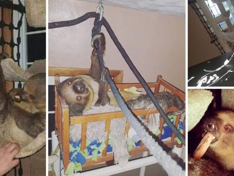 Couple transform their spare room into a rainforest for their pet sloth