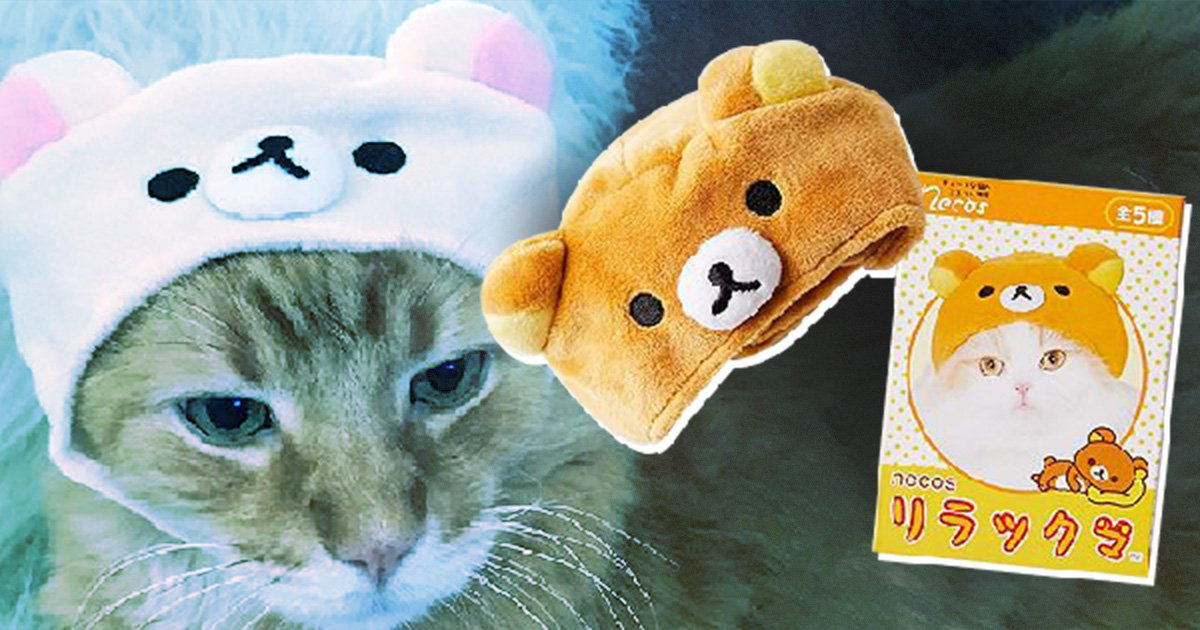 Urban Outfitters is selling caps for cats and they're so adorable