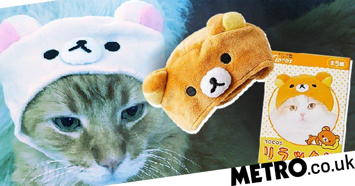 0e12354b5ea18 Urban Outfitters is selling caps for cats and they re so adorable ...