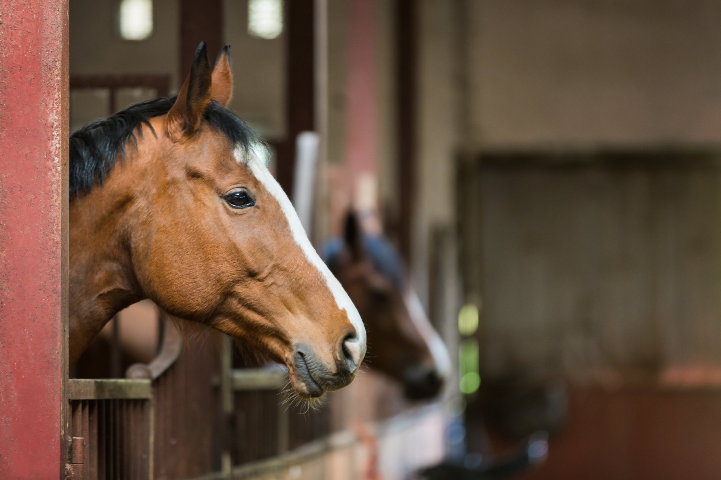 a horse looking over the stable doors