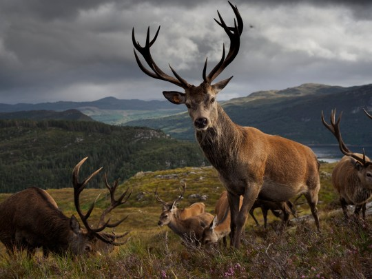 Lochcarron, Scotland, United Kingdom.