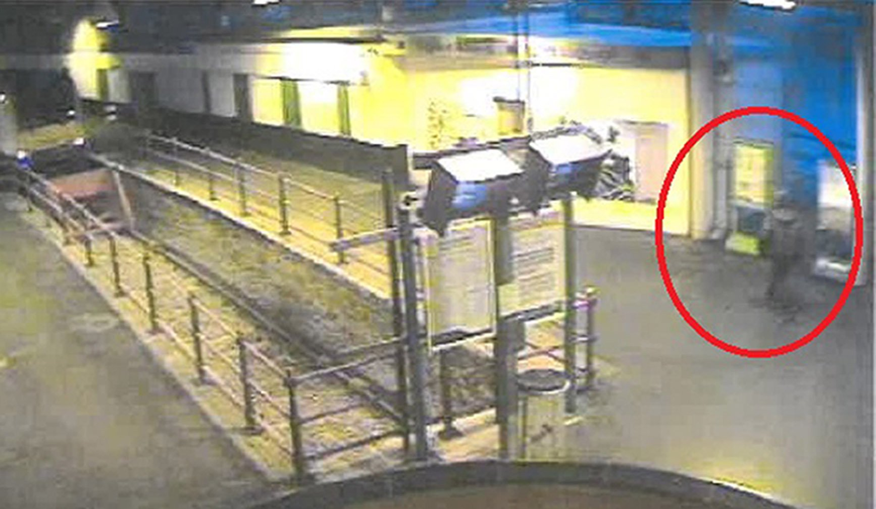 CCTV shows Maguire kicking and stamping down on the head of the seagull - A man who stamped a seagull to death in Holyhead train station has been convicted under the Animal Cruelty Act. Martin Maguire, 52, and of no fixed address, was found guilty of intentionally killing a wild bird at Caernarfon Magistrates? Court on 4 February, following the shocking and brutal incident last year. The court heard that at around 5:30am on 7 August, Maguire followed a seagull who was walking down a platform and purposely trapped it into a corner by some poster boards. CCTV shows Maguire then kicking and stamping down on the head of the seagull several times before walking away, killing it in the process. A member of station staff was starting their shift soon after and found the dead seagull with a broken neck and snapped wing. After an investigation by BTP officers, Maguire was arrested after being spotted at Holyhead station in November. At court he was fined ?180, and ordered to pay a surcharge of ?30 to fund victim services, plus ?200 in costs to the Crown Prosecution Service. Investigating Officer PC Harry Thompson said: ?This was a mindless and violent attack on an innocent animal, who suffered a painful, unnecessary and cruel death at the hands of Maguire. ?It was also incredibly distressing for the member of staff who found the dead seagull, and then had to watch Maguire?s attack in full on CCTV. Picture: Universal News And Sport (Europe) 13/02/2019