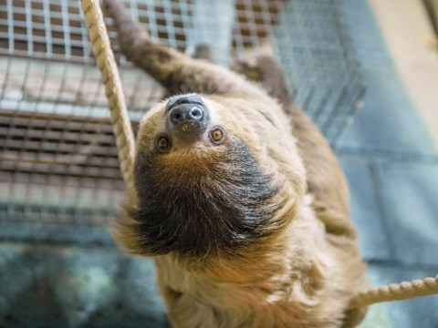 Attention, animal lovers: There is now a care home for ageing sloths