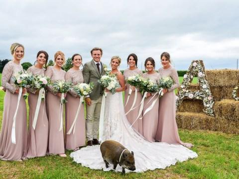 Micro pig photobombs couple on their wedding day