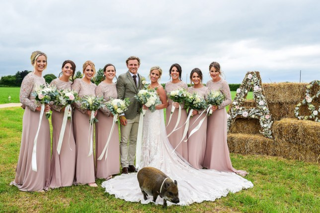 Pic by Caters News - (Pictured: Callum and Abbie Braley with Abbies bridesmaids and Pumba ) - This porky photobomber known as Pumba the micro pig has stolen the limelight at his owners big day. Taking on the role of chief entertainer at the nuptials, the one-year-old pig, who lives with owners Callum and Abbie Braley in The Leigh, Gloucester, was caught in every photo. From grazing in the background of the grooms shot with his best man, to hogging the limelight in the brides arms, Pumba was centre of attention. Professional rugby player Callum, 24, and personal assistant Abbie, 29, were determined to invite their prized pet along to their wedding in June last year. But it wasnt until they looked back at their wedding pictures earlier this month that they realised Pumba had photobombed all of their wedding shots. SEE CATERS COPY