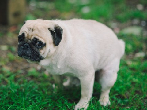 Dog owner fined £1,500 for refusing to pick up poo in his own garden
