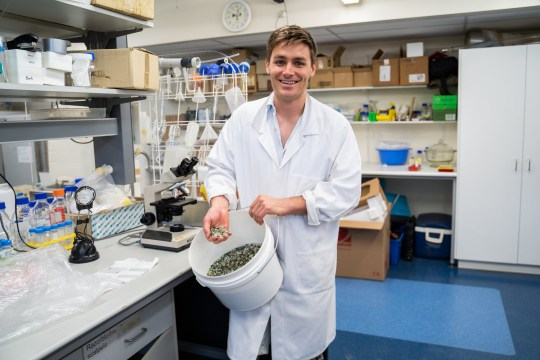 "PhD candidate Rhys Pirie. See National story NNglass; Scientists have invented a process that can turn waste glass into everything from toothpaste to car tyres. Glass is not always recyclable, leaving massive stockpiles with no use - but Australian researchers have now found a solution. PhD candidate Rhys Pirie said that a chemical found in 'drain cleaner' can break glass down and separate an amount of silica. This is then extracted for use in a commercial setting, meaning the liquid can be used for detergent, or even in crop fertilizer. Because of the effort required to sort out smaller fragments of glass, they tend to be discarded, stored, or sent to the landfill. Mr Pirie and Professor Damien Batstone from the University of Queensland were able to dissolve fragments into liquid silicate. Silicates are used in industry as adhesives, detergents, ingredients in cleaning compounds, cements, binders, and coatings. Mr Pirie said: ""We are taking waste glass that is currently going to the landfill because it is too small to be sorted into the right colour. ""We are dissolving it in a chemical most people know as drain cleaner - and once it's in that form it can be used to make things like tyres, detergent or silica gel. ""We can get all that silicate out of the glass. Glass is about 70 to 75 per cent silica. You need about 1.3kg of glass to make 1k of silica."