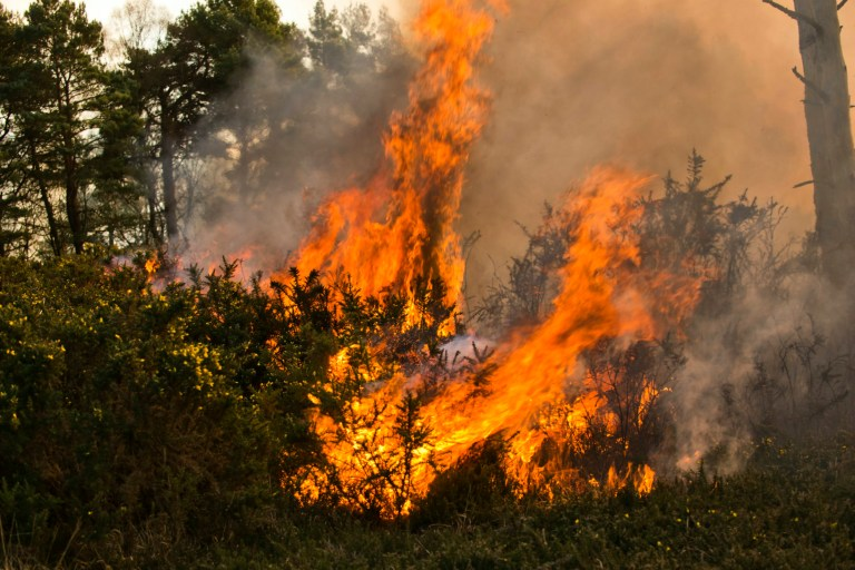 Wildfires rip through Ashdown Forest in east Sussex, as firefighters struggle to battle the blaze on the hottest February on record. February 26 2019.See National News story NNfire.Wildfires have torn through a forest best known as the setting of A. A. Milne's children's classic Winnie the Pooh.Two separate blazes started within an hour of each other in Ashdown Forest in east Sussex today (Tues), on the hottest February day on record.Dramatic pictures show smoke billowing from the forest known as Hundred Acre Wood in the book.Firefighters said more than 35 hectares of woodland had been affected, with both fires spreading.