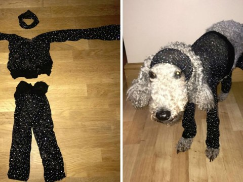 Woman has major fashion fail, ordering clothes made so small they fit her dog better than her