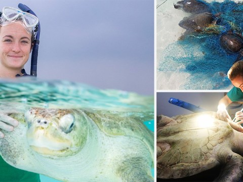 Turtle saviour sets up in Maldives to save them from fishing nets