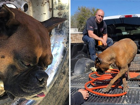 Unlucky dog freed by firefighters after getting head stuck in tyre