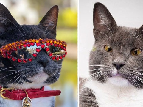 Meet Sunglass Cat – the cat with a rare eye condition and 400k Instagram followers