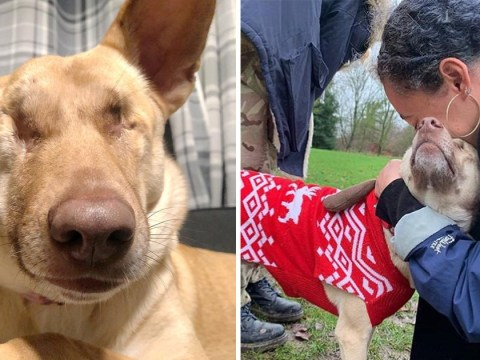 Dog shot 17 times and had ear chopped off in warzone is saved and brought to UK