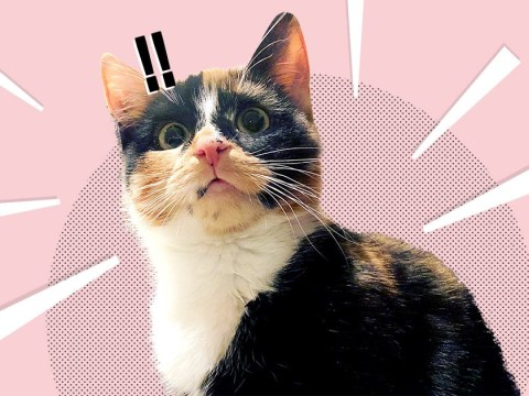 A cat festival with feline celebs, kitty-themed films, and vegan street food is coming to London