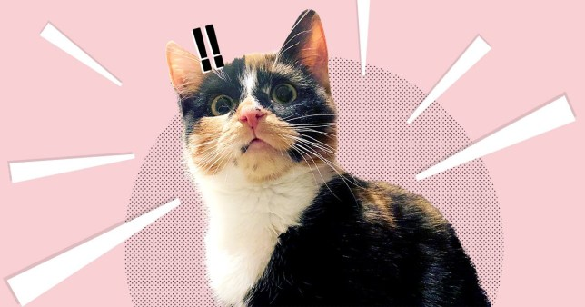 A Cat Festival With Feline Celebs Films And Street Food Is