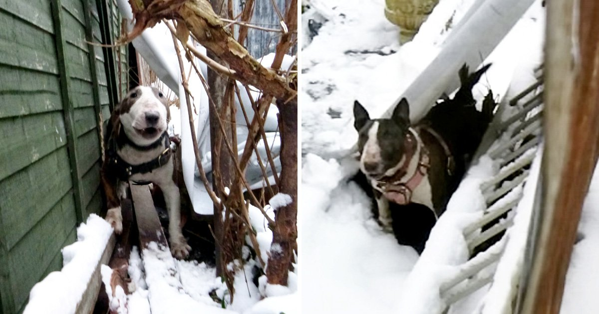 Cruel dog owner left pets chained up outside in Beast from the East snow