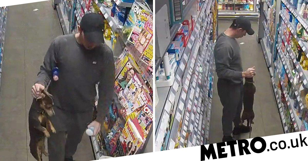 Man drags daschund by his neck while browsing supermarket shelves