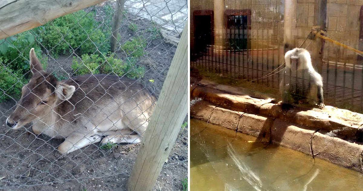 Tigers, bears and baboons left to starve in zoo two months after it closes