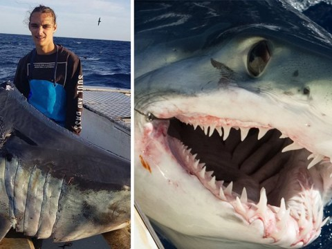Fisherman wants to know what creature bit off giant shark's head