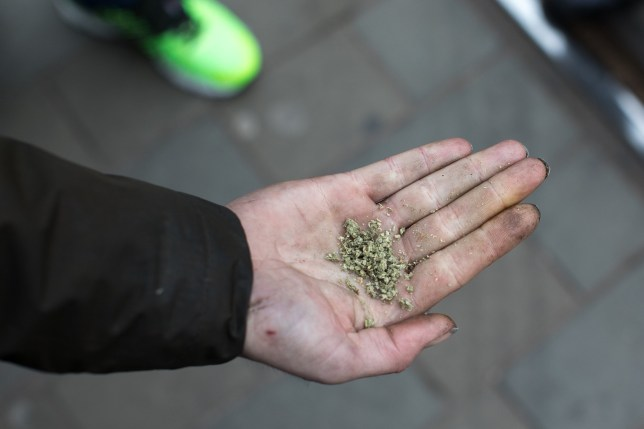 Mandatory Credit: Photo by Joel Goodman/Lnp/REX/Shutterstock (8588267e) A homeless man holds out his hand to show some spice he has bought and is intending to consume . An epidemic of abuse of the drug spice by some of Manchester's homeless population , in plain sight , is causing users to experience psychosis and a zombie-like state and is daily being witnessed in the Piccadilly Gardens area of Manchester , drawing large resource from paramedic services in the city centre . Spice Epidemic in Manchester, UK - 06 Apr 2017