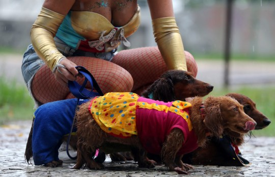 "A carnival reveller and her dogs take part in the ""Blocao"" or dog carnival parade during carnival festivities in Rio de Janeiro, Brazil, March 2, 2018. REUTERS/Sergio Moraes"