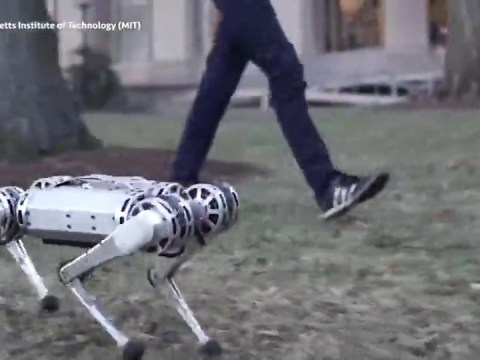 Terrifying robot dog can now perform backflips and move faster than a human
