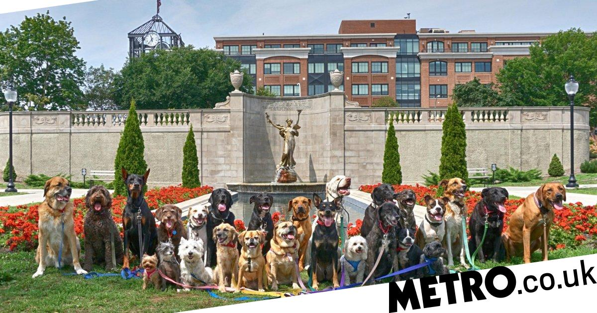 Extreme dog walker reveals how he can work with up to 26 pets at one time