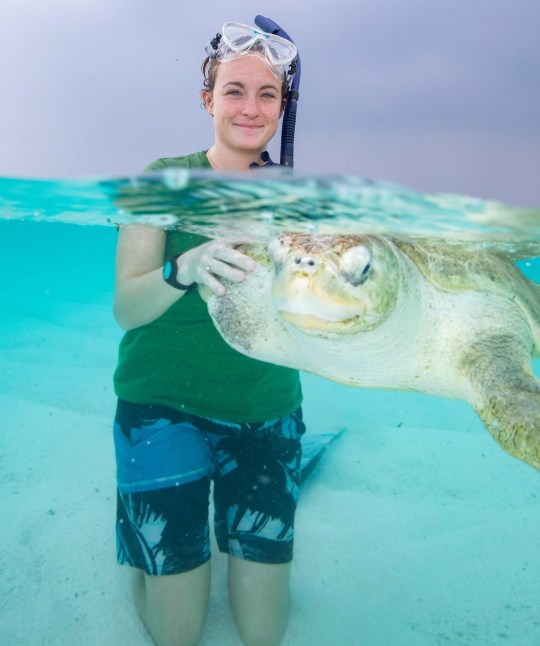PIC BY LUCY RAY / CATERS NEWS - (PICTURED Claire helps an injured turtle ) A young vet got her dream job after she moved to a tropical paradise island to run a hospital for turtles. Dr Claire Lomas, 25, felt she had little hope when she applied for the job at the Coco Palm Dhuni Kolhu in the Maldives March 2017 while working at a more traditional veterinary practice. But Claires dream quickly turned to reality when she was interviewed for the role before flying out to take out her new position August 2017. Ever since, Claire, from Rhos-on-Sea, North Wales, spends her days caring for injured or sick turtles who have been recovered from ghost gear abandoned fishing nets dumped in the ocean. SEE CATERS COPY