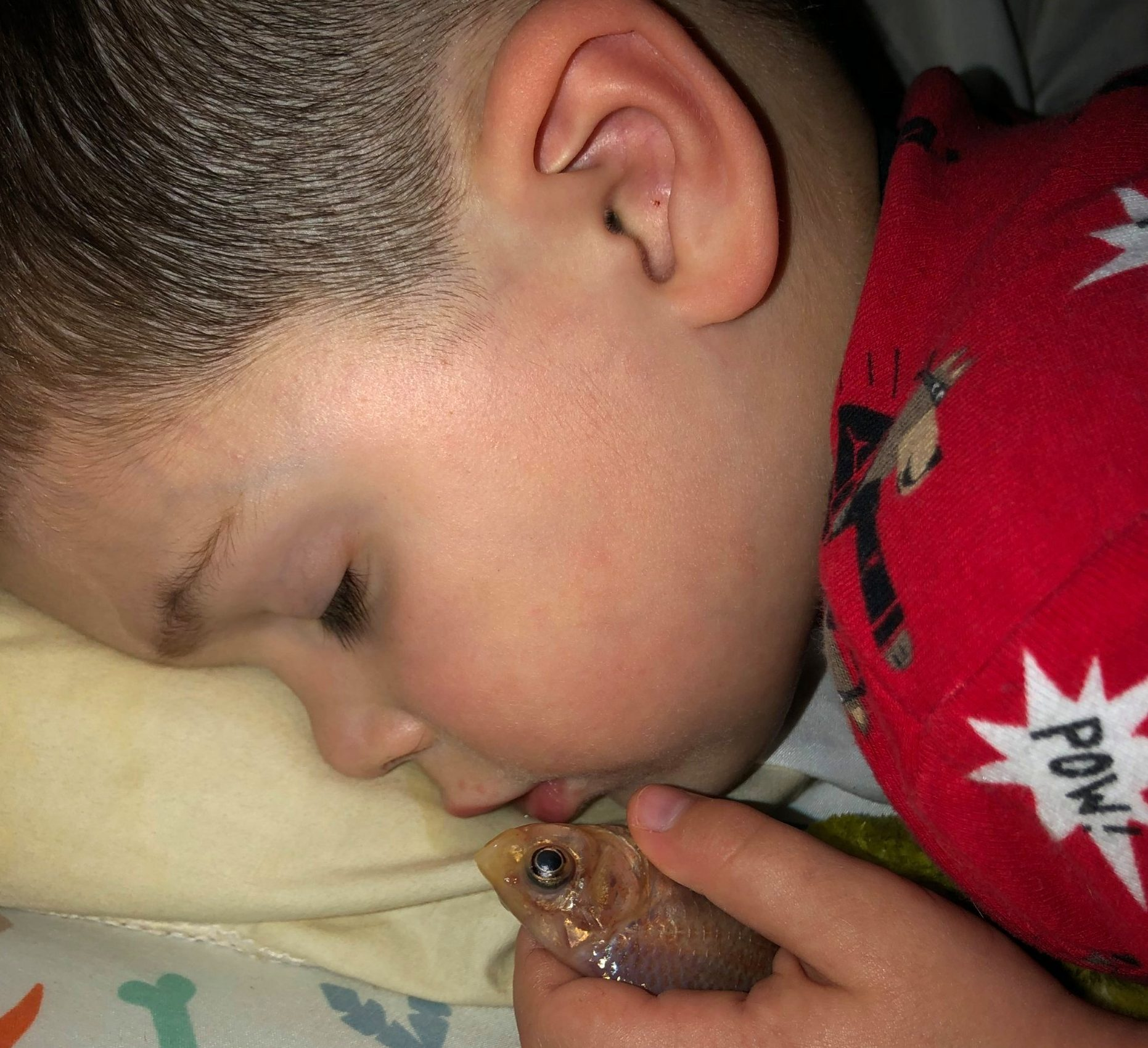 PIC FROM Kennedy News and Media (PICTURED: EVERETT HAMLIN ASLEEP WITH HIS GOLDFISH AFTER HE WANTED TO PET IT) This is the moment a shocked mum discovered her little boy peacefully asleep in bed snuggling with his beloved DEAD GOLDFISH - because he wanted to cuddle his pet while he slept. Mum Tori Hamlin got up from watching a film to check on sleeping Everett - but was confused when she noticed a chair pulled up to the tank and the lid removed. She and husband Corey Hamlin, 29, realised the fish was no longer in the tank and searched high and low before they spotted the tot peacefully asleep with the creature held tightly in his hand. SEE KENNEDY NEWS COPY - 0161 697 4266